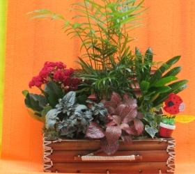 Maletin Plantas