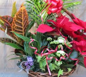 Cesta planta variada con poinsetia ( Navidad )