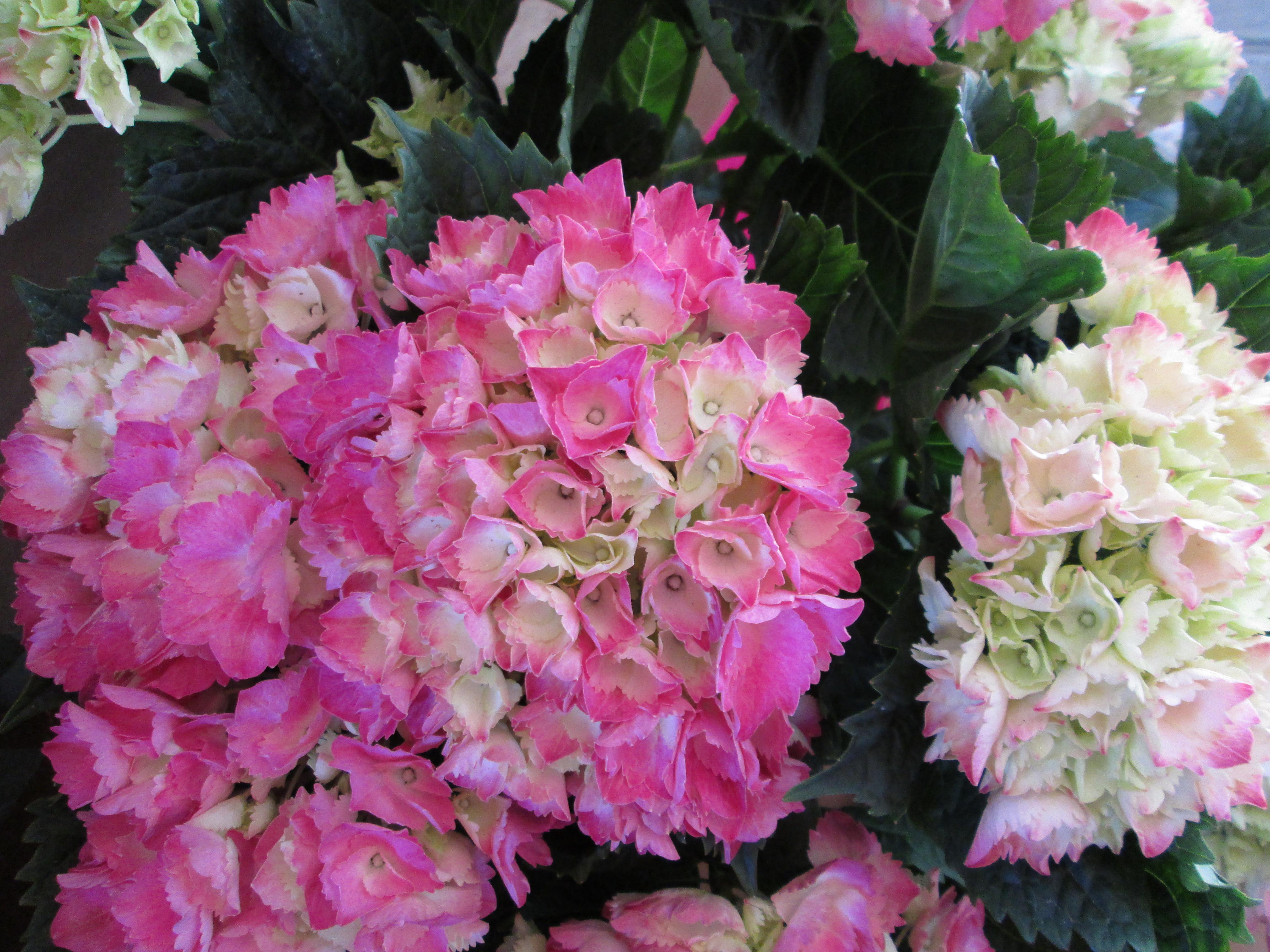 Plantas y flores plantas de interior tattoo design bild for Plantas de exterior