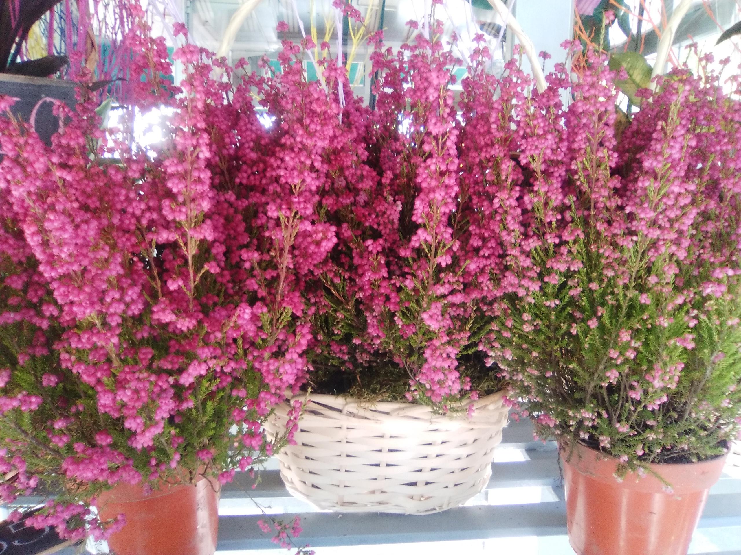 Plantas de exterior servicio a domicilio en todo el for Plantas de exterior
