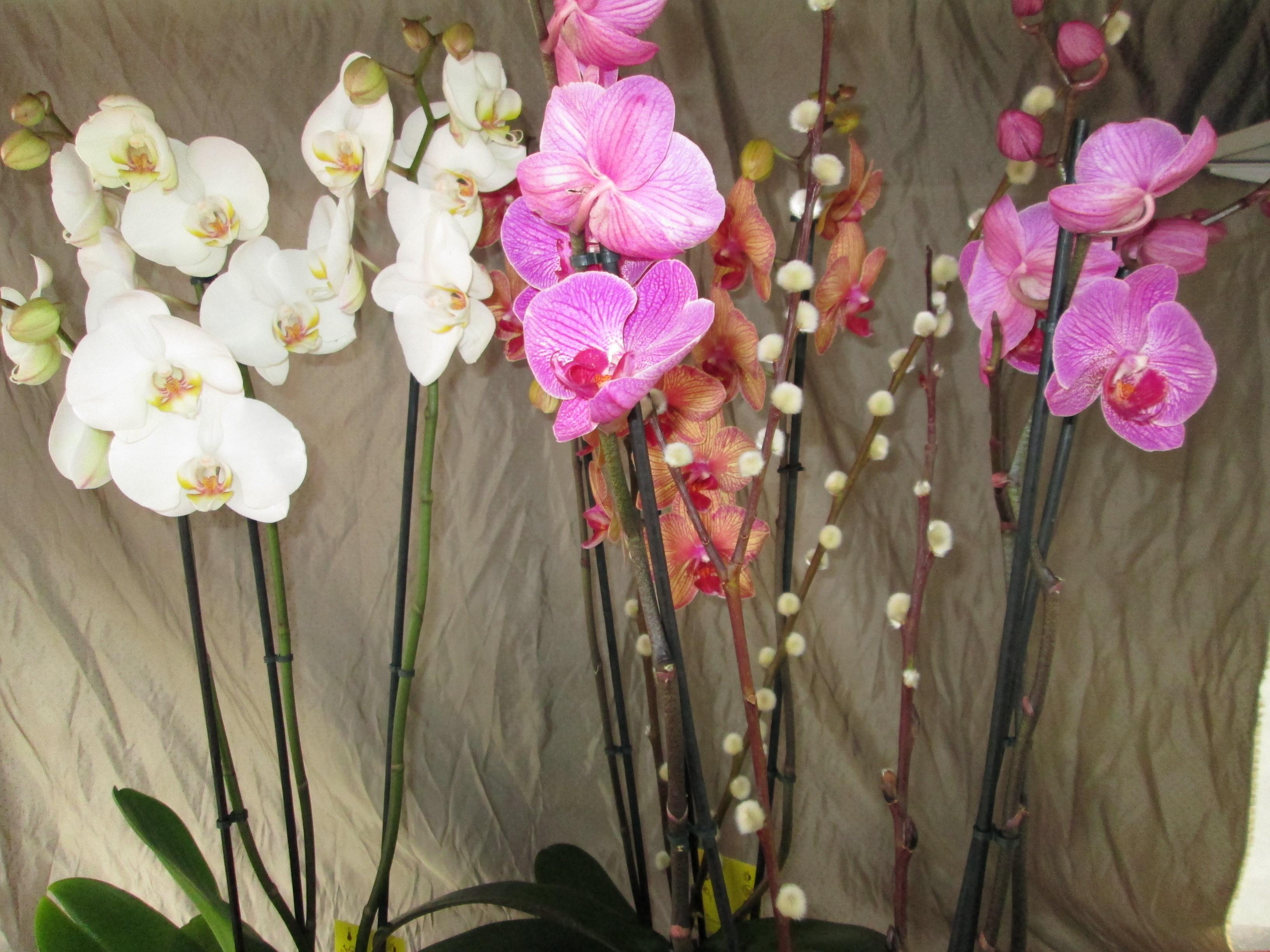 Plantas Interior. Orquideas