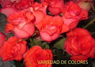 VARIEDAD DE COLORES